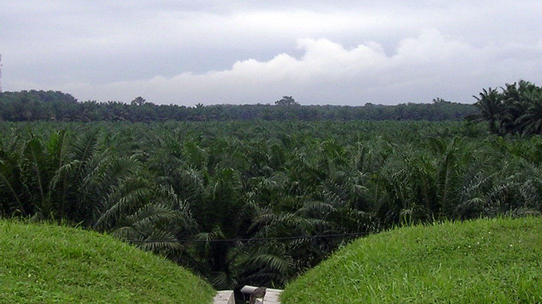 A strategic alliance with Colombian rice and oil palm farmers and their federations